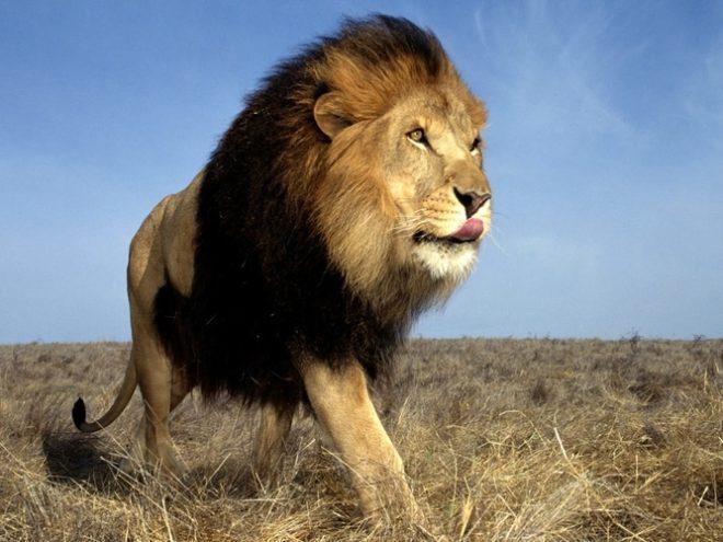 Gujarat Wildlife & Diu