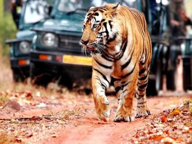 Jaipur 02N - Pushkar 01N - Udaipur 02N - Chittorgarh 01N - Ranthambore 02N - Jaipur 01N