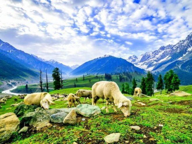 Kashmir & beyond...