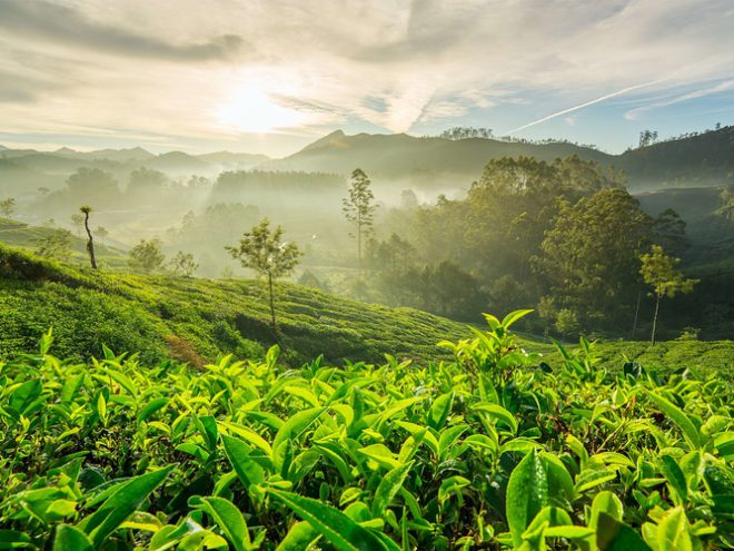 Kerala: Land of tea, tigers & beaches