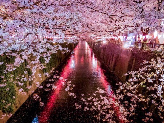 Japan: The Cherry Blossom Festival